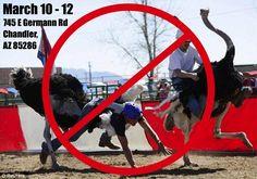 Ostrich Festival protest in Chandler, AZ!