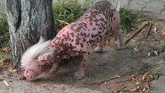 Animale rosa terrorizza i cinesi: è un cane?