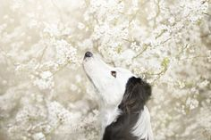 Polish Photography Takes The Most Stunning Photos of Dogs Ever.07)-There's a bird up there. I know there is.
