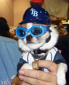 #1 fan of the Tampa Bay Rays!