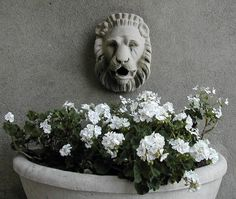 love me some white geraniums