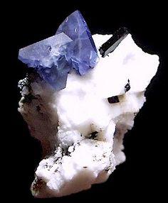 Benitoite crystals with Neptunite   Benitoite Gem Mine, San Benito County, California / Mineral Friends <3
