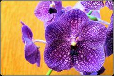 cultivando Orquídeas e idéias: SUA ORQUÍDEA NÃO DÁ FLOR? -APRENDA A TER LINDAS FL...