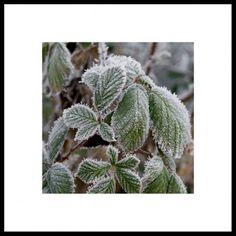 Photo Winter, Nature, Rest Cactus Plants, Rest, Winter, Nature, Photography, Winter Time, Naturaleza, Photograph, Fotografie