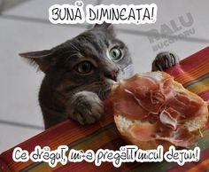 Valentino, Dog Cat, Cats, Funny, Animals, Morning Coffee, Morning Sayings, Gatos, Animaux