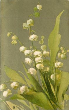 Catherine Klein- MUGUETS lily-of-the-valley Vintage Postcard Catherine Klein, Art Floral, Decoupage, Illustration Blume, Art Vintage, Lily Of The Valley, Botanical Prints, Vintage Flowers, Vintage Postcards