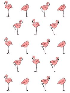 #flamingo #pattern #illustration