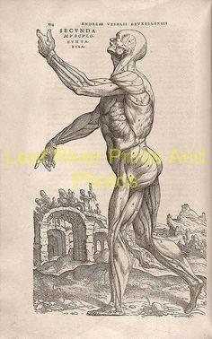 new to site Anatomy – Andreas Vesalius 1543f