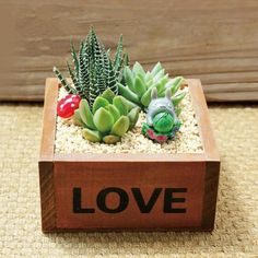 Hot Sale Love Succulent planter, LOVE wood planter, Cactus planter, mini succulent planter, mini pla