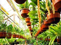 Hortus Botanicus - Leiden, the Netherlands III © Joost Lips