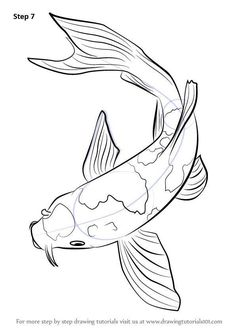 """Koi fish are the domesticated variety of common carp. Actually, the word """"koi"""" comes from the Japanese word that means """"carp"""". Outdoor koi ponds are relaxing. Koi Fish Drawing, Koi Fish Tattoo, Fish Drawings, Cute Drawings, Animal Drawings, Drawing Sketches, Dragon Koi Tattoo Design, Drawing Animals, Drawing Drawing"""