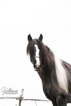 Manchmal fehlt einem ein klein wenig der Durchblick. :P Das fällt mir zumindest bei diesem Schnappschuss ein. :) Dabei braucht man eigentlich gar nicht immer den Durchblick sondern einfach sein Bauchgefühl. Darauf sollten wir uns allgemein viel mehr verlassen, eine Sprache die wir fliesend sprechen sollten, die unsere #Pferde perfekt beherrschen. #pferdefotografie Christian Girls, Horse Pictures, Horse Riding, Hunting, Horses, In This Moment, Animals, Photos, Simple