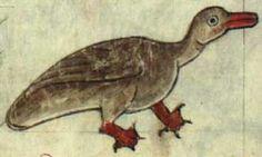 Medieval Bestiary : Duck Kongelige Bibliotek, Gl. kgl. S. 1633 4º, Folio 46v