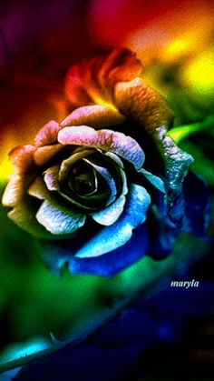 Color rose Beautiful Flowers Pictures, Beautiful Gif, Beautiful Roses, Free Moving Wallpapers, Bright Wedding Colors, Fairy Wallpaper, Wolf Spirit Animal, Flowers Gif, Amazing Gifs
