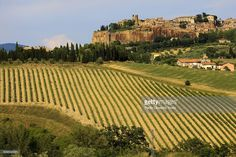 Stock Photo : Italy, Umbria, Terni, Orvieto, Green vineyard with town on rock in background