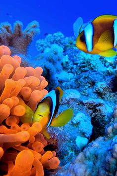 Georgia Aquarium, Virtual Field Trips, Monterey Bay Aquarium, Whale Sharks, Ocean Video, Beautiful Sea Creatures, Chroma Key, Underwater Life, Sea Fish