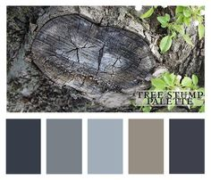 tree stump color palette @ StudioJRU