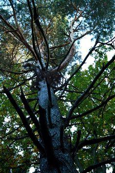 Baum nature