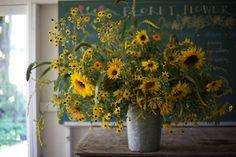Harvest & care tips for 10 heat-loving summer blooms