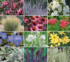 Deer Resistant Garden for Sun  Deer won't bother with this garden, but you'll love its long-season of bloom and varied foliage forms and colors. From May through September, the plants in our Deer-Resistant Garden for Sun provide a spectrum of harmonious blooms in shades of blue, rose, yellow, and white, offset by the greens, burgundy, and silvers of foliage. The narrow plumes of Switch Grass carry the show through fall and into winter.