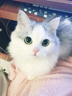 Pictures, videos, articles and questions featuring and about cats. Cute Cats And Kittens, Baby Cats, I Love Cats, Kittens Cutest, Pretty Cats, Beautiful Cats, Animals Beautiful, Cute Baby Animals, Animals And Pets