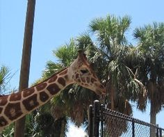 Things To Do with Kids in Naples, Florida - 365 Things to Do in Naples and Southwest, Florida
