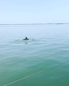 Dolphin Spotting in Rio Sado ☀️������ #riosado #dolphin #spotting #globetrotting #holiday #fun #happy #amazing #boozecruise #private #viewing #champagne #posh #drinks #setubal #portugal #view #experience #travel #lisbon #london #swiss #tanning #sun #heat #beach #boat #love #life #enjoy http://tipsrazzi.com/ipost/1522431390615232325/?code=BUgw0iYhl9F