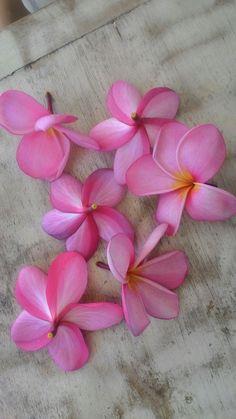 pink plumeria smells like sky