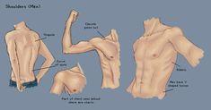 Shoulder Study - Men by KinderCollective.deviantart.com on @deviantART