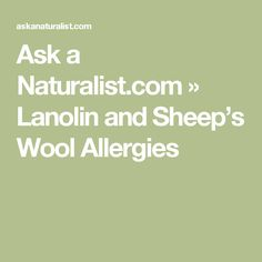 Ask a Naturalist.com » Lanolin and Sheep's Wool Allergies
