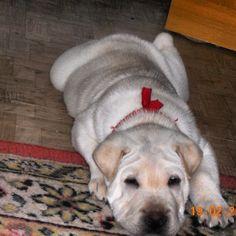 my dog... nippy