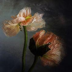 luftig leicht by Christine Ellger on 500px