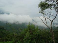 Monteverde Regenwald - Costa Rica