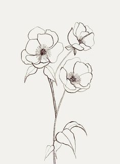 delicate florals