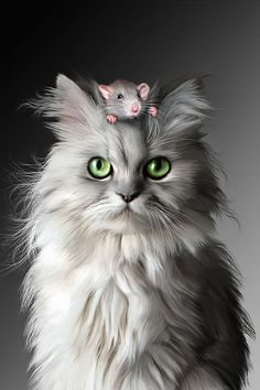 These cute cats will make you happy. Cats are wonderful friends. I Love Cats, Cute Cats, Funny Cats, Funny Animals, Cute Animals, Funny Mouse, Adorable Kittens, Crazy Cat Lady, Crazy Cats