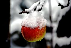 Winterbilder mit einem Apfel und Schnee. Winter images with an apple and snow.