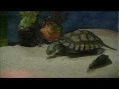 The Gallery For Box Turtle Indoor Habitat Ideas