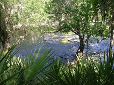 Big Shoals State Park features the largest whitewater rapids in Florida!