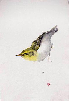 Karl Martens, Wood Warbler (Unframed) (Hungerford Gallery)