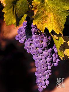 Walla Walla Wine Country, Walla Walla, Washington, USA Photographic Print by Richard Duval at Art.com