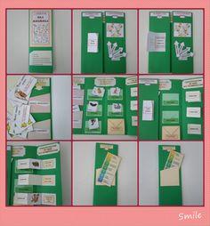 """PER GLI ALLEGATI CLICCA QUA LAPBBOK ANIMALI PER LE IMMAGINI DEGLI ANIMALI CLICCA QUA ATTIVITA' SCIENZE ANIMALI [gallery ids=""""1544,1545,1546,1547,1548,1549,1550,1551,1552″ type=&#… Young Teacher Outfits, Summer Teacher Outfits, Science Projects, School Projects, Special Needs Teacher, D Book, Mini Books, Lap Books, Study Notes"""
