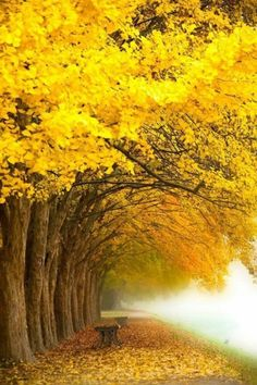 Yellow Tree by Topic Images Beautiful Nature Wallpaper, Beautiful Landscapes, Beautiful World, Beautiful Places, Yellow Tree, Yellow Leaves, Autumn Scenes, Colorful Trees, Nature Pictures