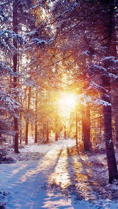 【新着2位】雪の森