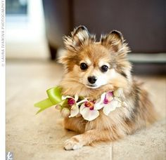 This floral collar is so tiny and so cute!