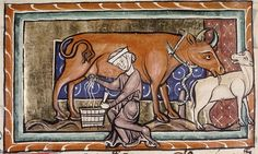 >Woman milking cow, cow licks calf.  English 13th cent.  MS Bodl. 764 by tony harrison, via Flickr