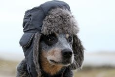 ready for the cold