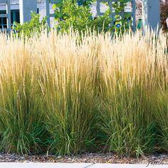 Die 226 Besten Bilder Von Gräser In 2019 Garden Plants Beautiful