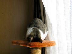高いところから「すまん寝」 : 【ネムイネ】ごめん寝 すまん寝 する猫【カワイイネ】 - NAVER まとめ