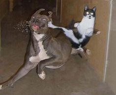Jeje perros vs gatos!! XD