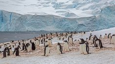 Gentoo Penguin Colony and Glacier, Neko Harbor, Antarctica